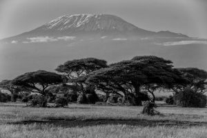 Kilimandscharo aus der Ebene